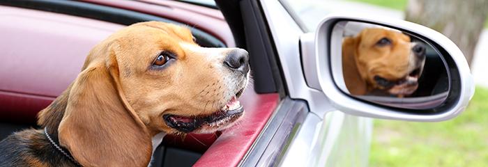 Día mundial de llevar tu perro al trabajo